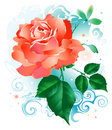 Red_rose_flower 免版税库存照片