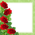 Red rose flowers on green frame for holiday background Stock Images