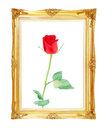 Red rose on golden frame with empty  for your picture, photo, im Royalty Free Stock Photo