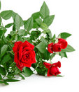 Red rose with green leaves Royalty Free Stock Photo