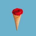 Red rose in ice cream cone a bright blossom a waffle light blue background Royalty Free Stock Image