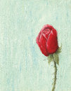 Red rose on light blue background acrylic illustration of Stock Photography