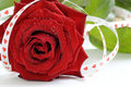 Red rose like a love symbol Stock Images