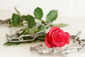 Red rose with metal chain - series of red roses Royalty Free Stock Photo