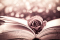 Red rose on the open book on bokeh background Royalty Free Stock Photo