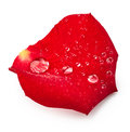 Red rose petal with drops of water Royalty Free Stock Photo