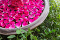 Red rose petal floating water in bowl basin Royalty Free Stock Images