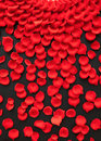 Red rose petals Royalty Free Stock Image
