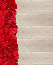 Red rose petals on wooden planks texture close-up Royalty Free Stock Photo
