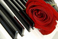 Red rose on piano Royalty Free Stock Photos