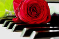 Red rose on Piano Royalty Free Stock Photo