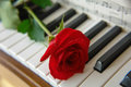 A red rose placed on piano keys as a conceptual study in the beautiful harmony of nature and sound Stock Images