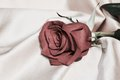Red Rose Purity Symbol In Vint...
