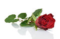 Red rose with reflection Royalty Free Stock Photo