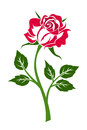 Red rose with stem illustration of and leaves on a white background Royalty Free Stock Images