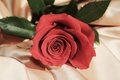 Red rose, symbol of appreciation Royalty Free Stock Photo