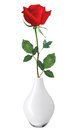 Red rose in vase isolated over white background Royalty Free Stock Photos