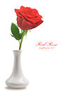 Red rose in vase isolated on white background Stock Photos