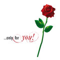 Red rose vector isolated on white background Stock Photo