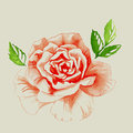 Red rose watercolor illustration of a bud with green leaves Stock Images