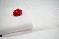 Red rose on white towel