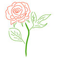 Red Rose  on white, vector illustration Royalty Free Stock Photo