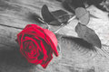 Red rose on wood - black and white with single flower colored