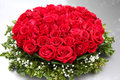 Red roses big bunch of Stock Photography