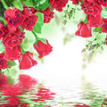 Red roses a bouquet of floral background Royalty Free Stock Image