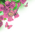Red roses a bouquet of floral background and butterfly Royalty Free Stock Images