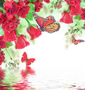 Red roses a bouquet of floral background and butterfly Stock Photo