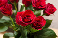 Red roses close up shot of Royalty Free Stock Images