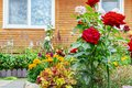 Flower beds near the house. Landscaping of the site Royalty Free Stock Photo