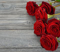 Red roses on a gray background Royalty Free Stock Images