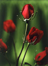 Red roses with green background vertical Royalty Free Stock Photo