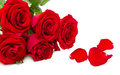 Red roses isolated Stock Image