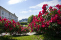Red roses in Mirabell gardens Stock Photography