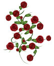 Red roses ornament Stock Image