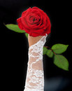 Red roses on a photo in hands Royalty Free Stock Images