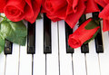 Red roses on a piano sitting keys with soft focus Stock Photo