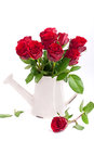 Red roses in a vase Stock Photography