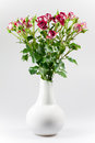 Red roses in a vase on white background Royalty Free Stock Images
