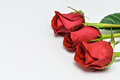 Red Roses on white background. Romantic composition for Valentine`s Day, Anniversary, Events. Place for text Royalty Free Stock Photo