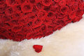 Red roses on white fur set of Stock Photography