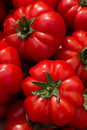 Red round tomatoes display Royalty Free Stock Photo