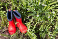 Red rubber boots in the grass with snowdrops. Royalty Free Stock Photo