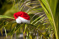 Red Santa's hat hanging on palm tree Royalty Free Stock Photos