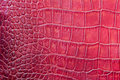 Red scales macro exotic background, embossed under the skin of a reptile, crocodile. Texture genuine leather close-up Royalty Free Stock Photo