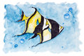 Red sea banner fish heniochus intermedius isolated handmade watercolor painting illustration on a white paper art background Royalty Free Stock Photos