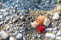 Red Sea star, sea shells, stone beach, clean water Royalty Free Stock Photo